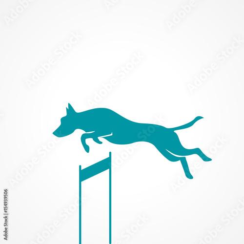 Fotografía  silhouette chien saut
