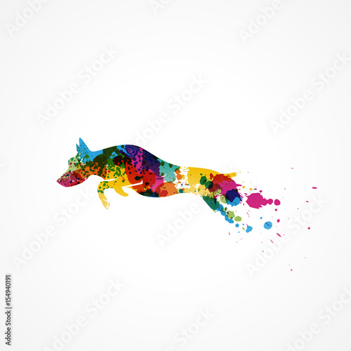 Fotografía  silhouette chien coloré