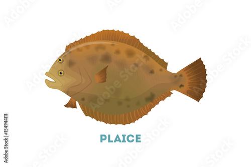 Tablou Canvas Isolated plaice fish.