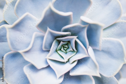 Papiers peints Macro photographie Succulent flower pattern closeup