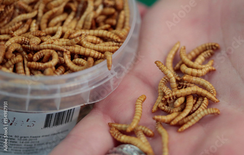 An attendee of the 'Eating Insects Detroit: Exploring the