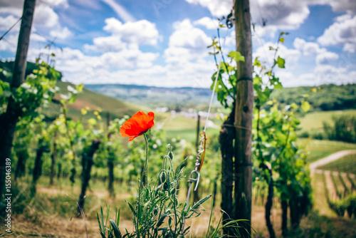 Photo sur Aluminium Vignoble Vineyards in Luxembourg
