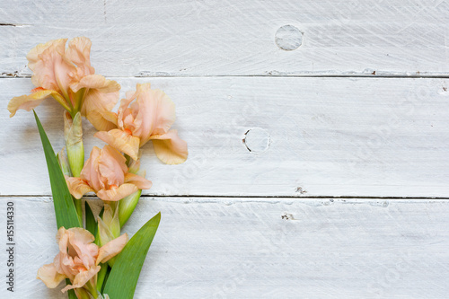 tender iris flowers over white wooden table