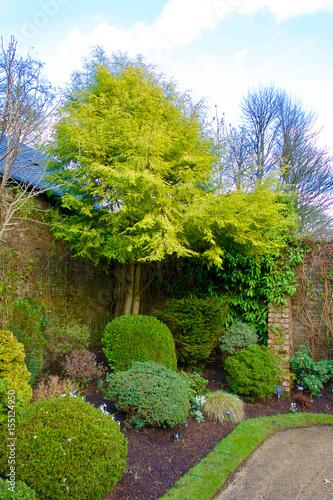 Trees and shrubs in the corner of a walled garden. Billede på lærred