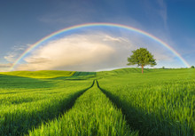 Rainbow Over A Green Field In A Spring Evening