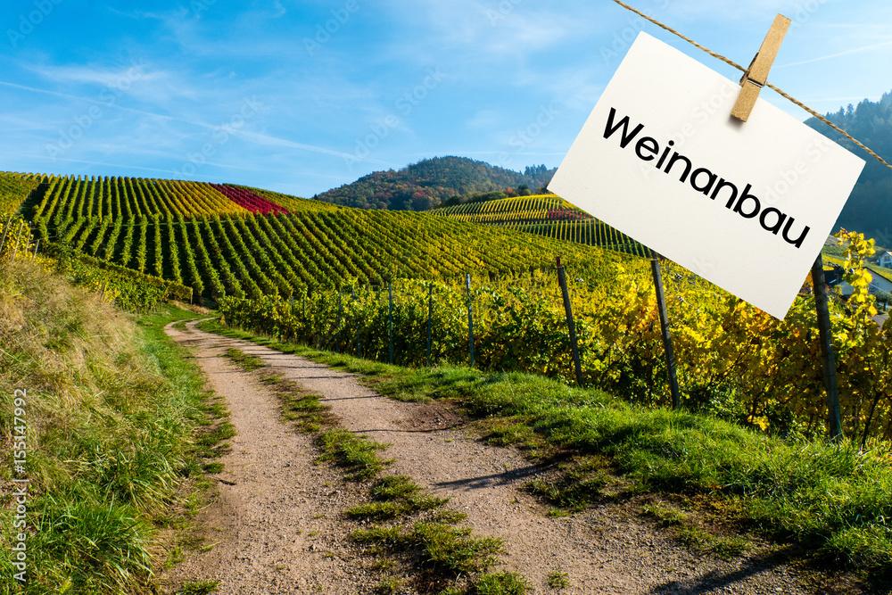 Weinberg reben rebstöcke weinanbau weinreben Poster, Plakat | 3+1 ...