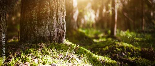 Fototapeten Wald Plants clear bokeh