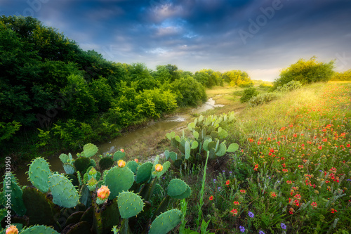 Poster Texas Cactus and Wildflowers at Sunrise