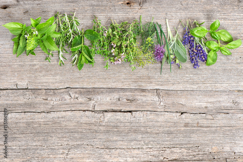 Fresh herbs basil rosemary sage thyme mint dill