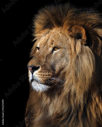 Photo Lion's profile portrait isolated at black