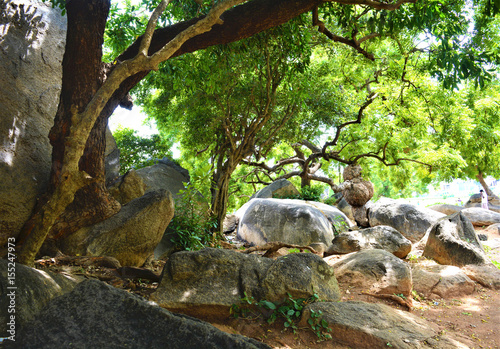 Rocks and trees in a garden in Mahabalipuram, Tamil Nadu, India