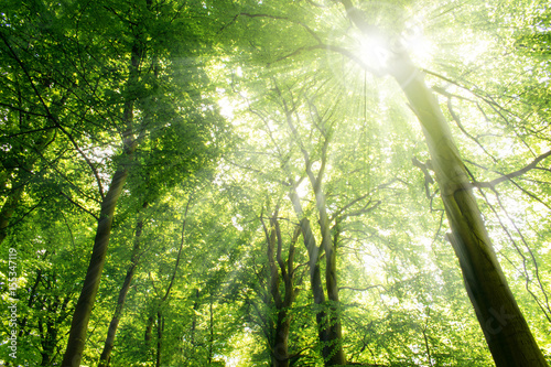 In de dag Bomen Sun rays shining through trees. Nature background.