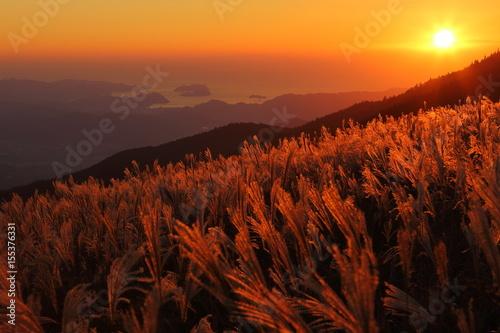 Obraz na plátne  生石高原 夕日に染まるススキの群生