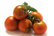 Solanum Lycopersicum Tomato Pomodoro Tomate Tamata Camone парадајз Tomaatti Sardo Pomodorino Trátaí Pomidor Paradajka Tomaat Tomat Paradicsom Domates Sardegna Rajčica Roșie Pumàta