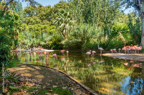 Beautiful flamingos in Barcelona Zoo, Catalonia, Spain.