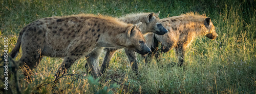 Aluminium Prints Hyena Gang on the move