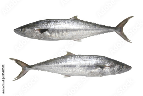 Fresh Pacific king mackerels or Scomberomorus fish isolated on white background.