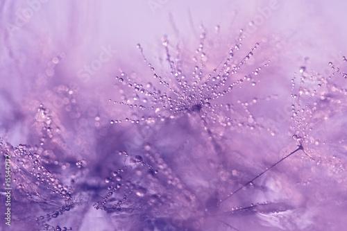 dandelion-makro-z-kropelkami-wody-delikatne-makro