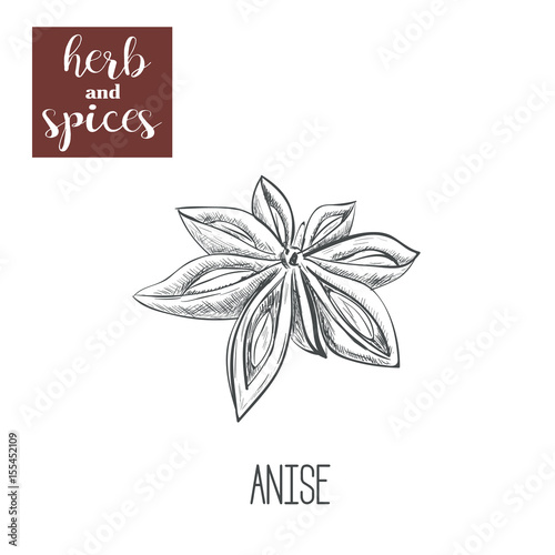 Anise hand drawing Canvas Print