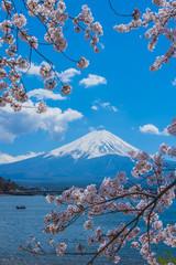 Fototapeta 富士山と満開の桜