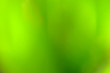 Leinwandbild Motiv Abstract blur of colorful flowers