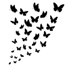 Vector Silhouette Of Butterflies On White Background.