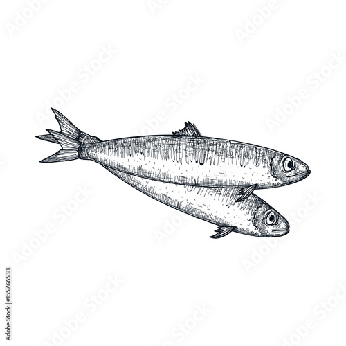 Photo Anchovy fish hand drawn isolated icon