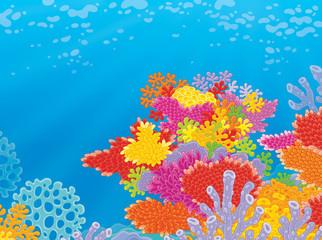 Fototapeta na wymiar Colorful coral reef in a tropical sea