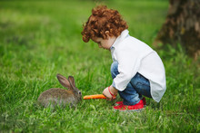 Boy Feeding Rabbit With Carrot...