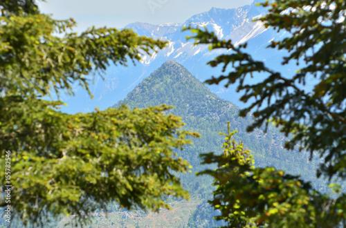 Ormanla Çevrili Dağlar Poster
