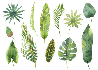 FototapetaWatercolor set tropical leaves and branches isolated on white background.
