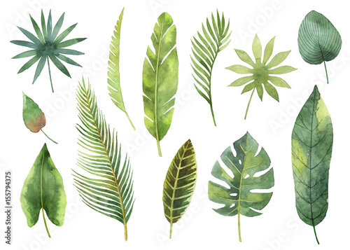 Foto  Watercolor set tropical leaves and branches isolated on white background