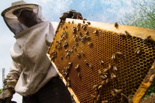 Photo beekeeper working on beehive