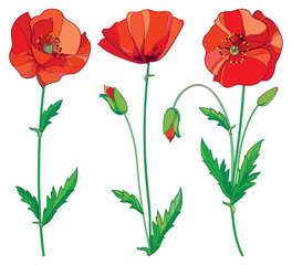 Plakat Vector set with outline red Poppy flower, bud and green leaves isolated on white background. Floral elements in contour style with poppy for summer design. Symbol of Remembrance Day.