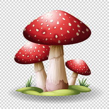 Red Mushrooms On Transparent B...