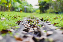 Dry Leaves In The Drain Ditch