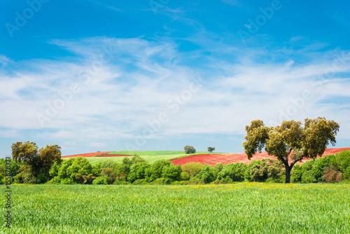 Fotografia, Obraz  dehesa of Extremadura
