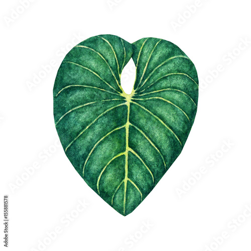 Photo Stands Candy pink Hand drawn watercolor tropical leaf isolated on the white background