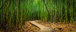 canvas print picture - Bamboo Forest