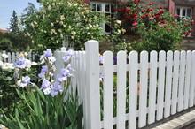 Weißer Lattenzaun Um Einen Vorgarten Mit Rosen Und Iris Als Grundstücksabgrenzung