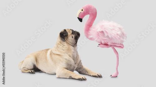 Mops ist erstaunt, ein Flamingo steht auf einem Bein