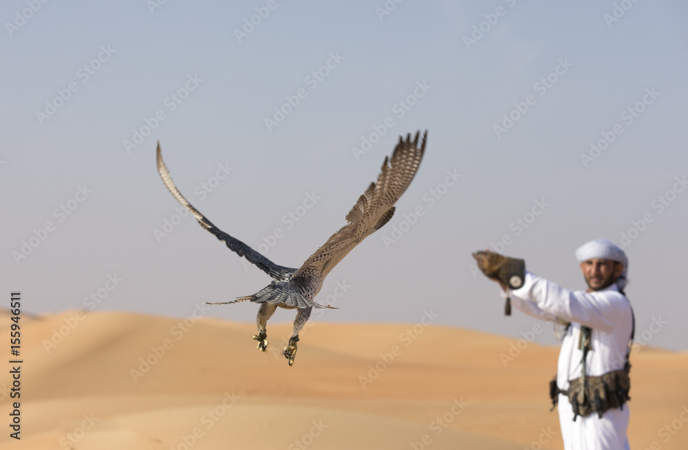 peregrine falcon flying towards his trainer