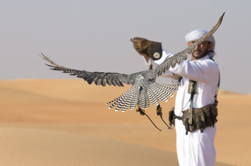 falcon and falconer training it in a desert