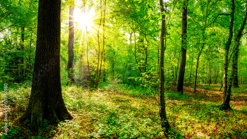 Photo Stands Green Sonnenaufgang im Wald