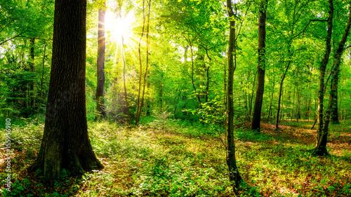 Tuinposter Groene Sonnenaufgang im Wald