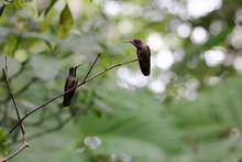 Cute Hummingbird Couple Lookin...