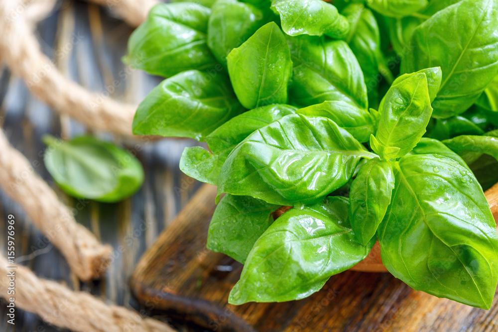 Fototapety, obrazy: Green basil leaves closeup.