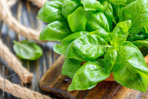 La pose en embrasure Condiment Green basil leaves closeup.