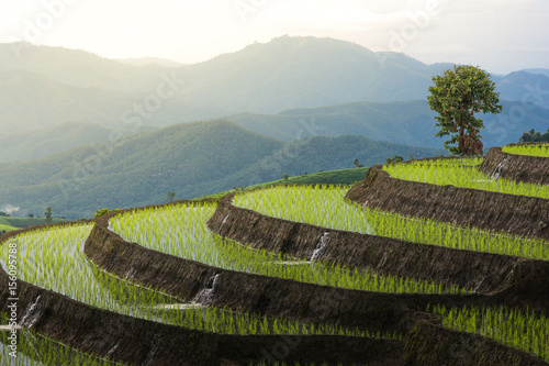 Fotobehang Rijstvelden Terraced rice field