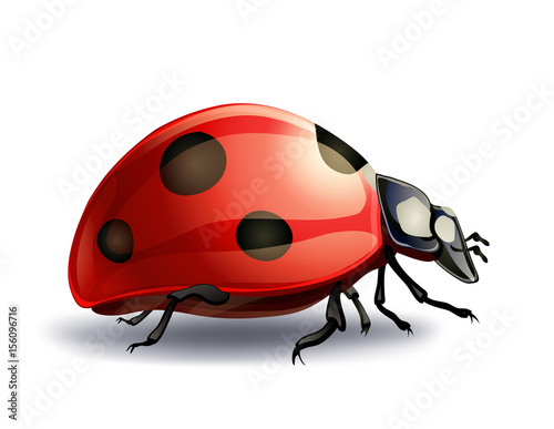 Obraz na plátne ladybug on white. vector illustration